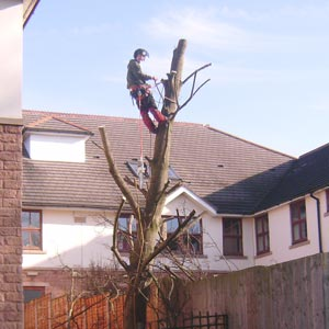 Tree Surgery Sedgley